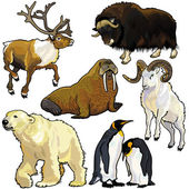 Set with wild animals of arctic — Stockvektor