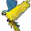 Blue and yellow macaw — Imagen vectorial