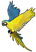 Blue and yellow macaw — Stock Vector