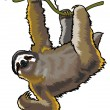 Sloth - Stock Vector