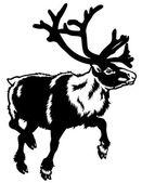 Caribou black white — Stock Vector