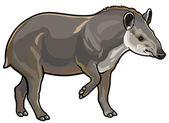 Lowland tapir — Stock Vector