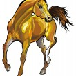Arabian horse - Stock Vector