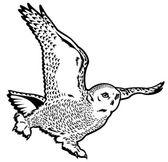 Sněžná sova černá bílá — Stock vektor