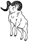 Mountain ram black white — Stock Vector