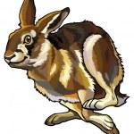 Постер, плакат: Running hare