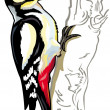 Woodpecker - Stock Vector