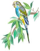 Australian parakeet — Stock Vector