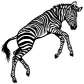 Zebra Baby — Stock Vector