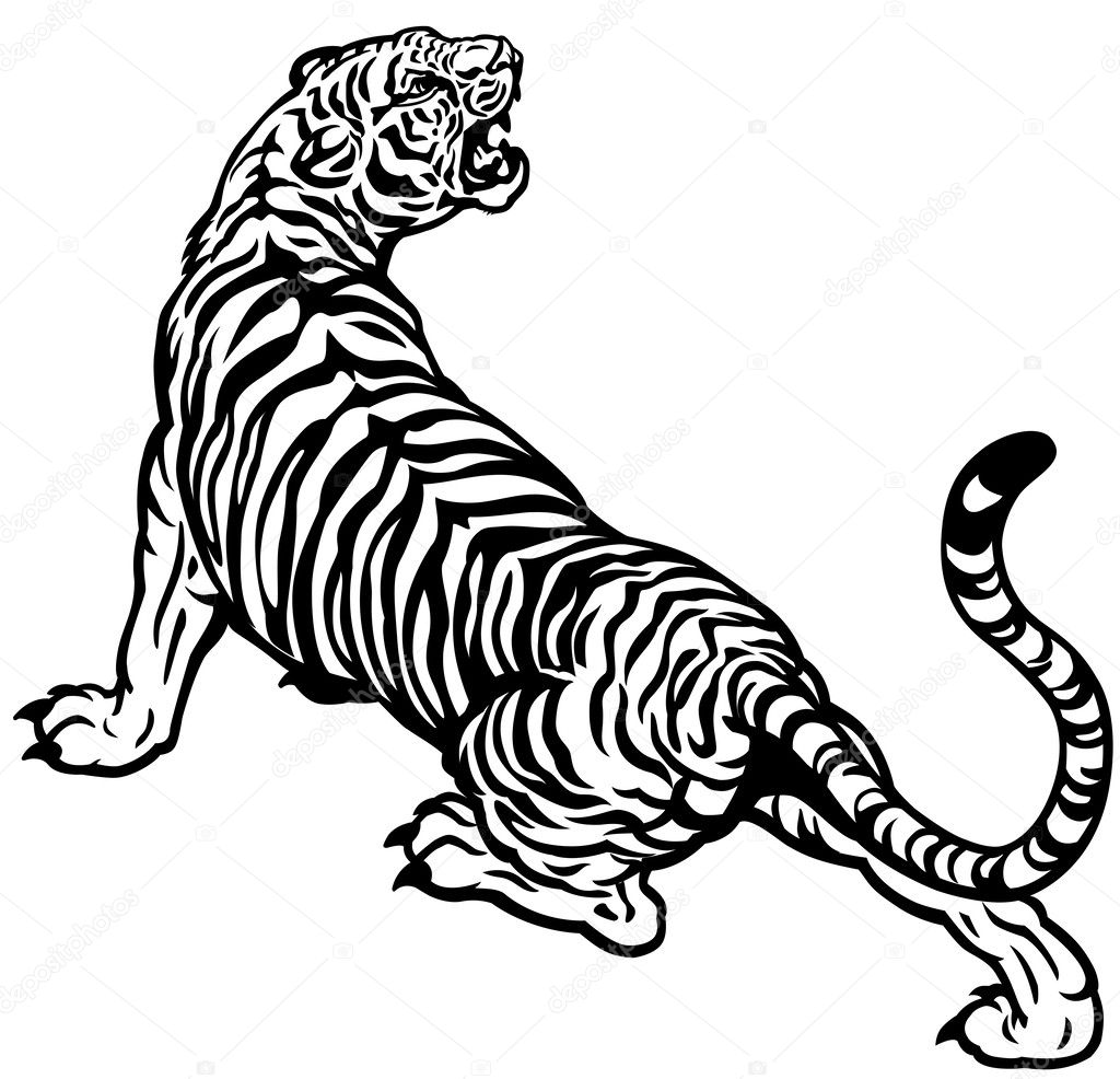 Angry tiger black white — Stock Vector © insima #33581885