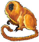 Golden lion tamarin — Stock Vector