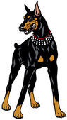 Doberman Pinscher — Vector de stock