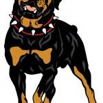 Rottweiler — Stock Vector #38168097