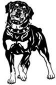 Rottweiler black white — Stockvektor