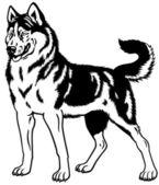 Siberian husky black white — Stock Vector