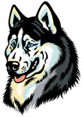 Siberian husky head — Stock Vector