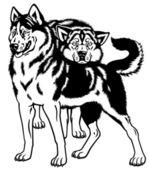 Siberian husky dogs black white — Stock Vector