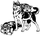 Three siberian husky black white — Stock Vector