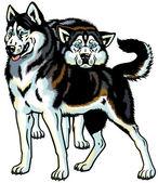 Perros husky siberiano — Vector de stock
