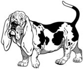 Basset hound black white — Stock Vector