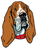 Basset hound head — Stock Vector