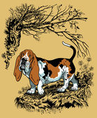 Basset in forest — Stockvektor