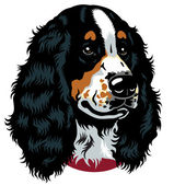 Spaniel head — Stock Vector