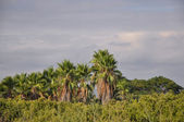 Rain clouds above the jungle — Stock Photo