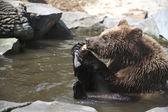 Funny bear — Stock Photo