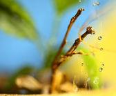 Outono, chuva — Fotografia Stock