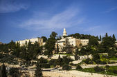 Israel, mount olives — Stock Photo