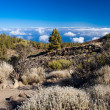 Teide notional park — Stock Photo