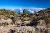 Parque nocional del Teide — Foto de Stock