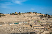 Ancient Jewish Cemetery on The Olive Mountain in Kidron Valley — Stock Photo