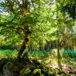 Sunbeam through a tree — Stockfoto