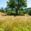Lonely tree on the meadow — Stock Photo