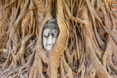 Buddha head at Ayuthaya — Stock Photo