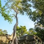 Tree grown over Ta Prohm temple, Cambodia — Stock Photo #47226067