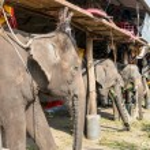Elephant stable in Ayuthaya, Thailand — Stock Photo #50200633