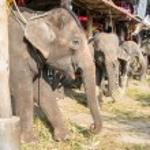Elephant stable in Ayuthaya, Thailand — Stock Photo #50200649