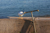Curious seagull — Stock Photo