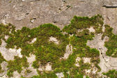 Green moss on stone — Stock Photo