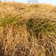 Clump of dry grass — Stock Photo