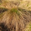 Closeup of grass clump — Stock Photo