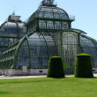 Palm house in Schonbrunn- Vienna, Austria — Stock Photo