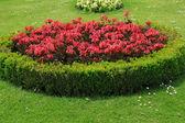 Hermoso jardín de flores en schonbrunn-Viena, austria — Foto de Stock