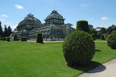Palm house in Schonbrunn garden in Vienna, Austria — Stock Photo