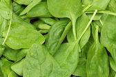 Fresh spinach leaves. background or texture — Stock Photo