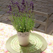 Flowerpot with lavender on table at street cafe — Stock Photo