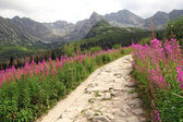 Beautiful view on hiking path in Tatra Mountains in Poland — Stock Photo